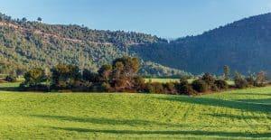 שדה של חקלאות