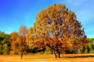 עץ יבש